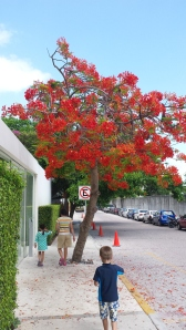 love the colour of this tree